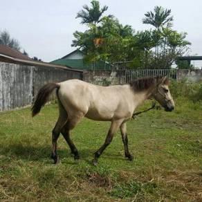 Kuda padi