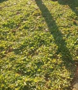 Landskap dan potong rumput