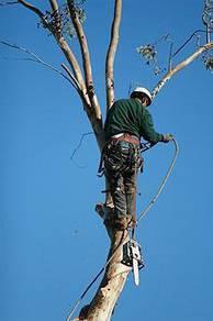 Tree Climbers pakar & Cut tree pro