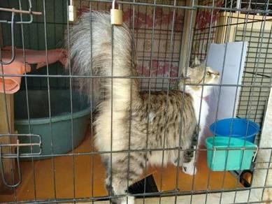 Kucing betina dan jantan + sangkar