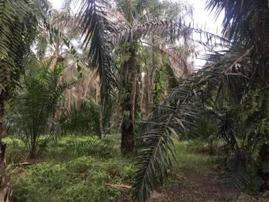 Tanah Pertanian Sawit 2.43 ekar di Kampung Parit Haji Khalid Sri Medan