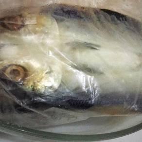 Ikan baulu TANPA tulang