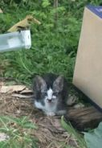 2 Female kittens for adoption