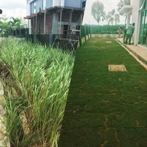 Garden grass landscaping lanskap