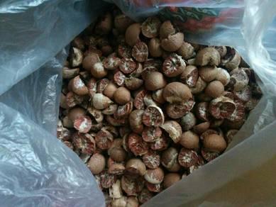 Buah Pinang /Areca nut