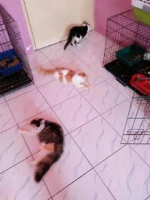 Cat's Boarding