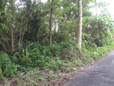 Land in Sungai Bakap For Rent