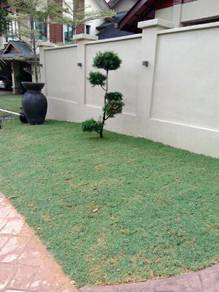 Pokok potong,tanam rumput,landscap