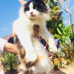 Kucing utk di adopt