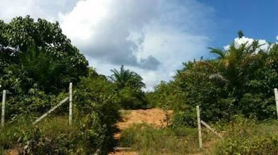 Kebun sawit 24 ekar di Ciku 8, Gua Musang