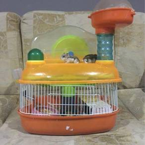 Dwarf hamster pair with cage