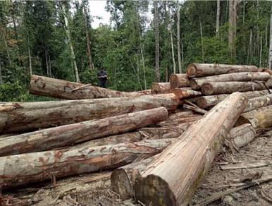 Kilang timber factory sdn bhd Kayu balak