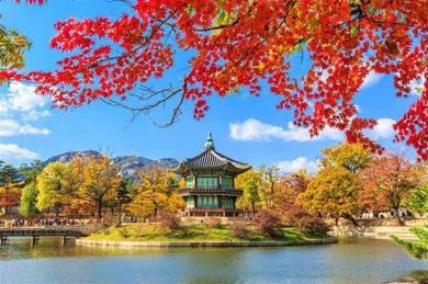 [autumn] muslim 5d4n korea tour