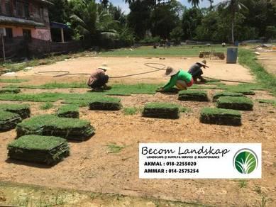 Rumput grass & service tanam
