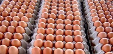 Original country chicken eggs