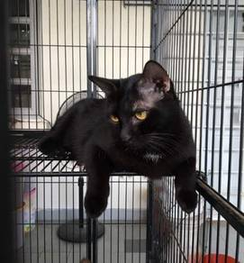 Female Cat Vaccinated Spayed