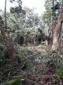 Tanah Pertanian Getah, Bukit Chengkuan, Mukim Bohor, Pulau Langkawi
