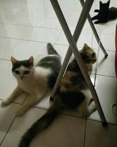 Kucing untuk Dipindah Milik