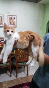 Kucing mix