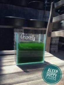 Chlorella untuk Biak Kutu Air