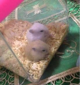 Hamster Roboski