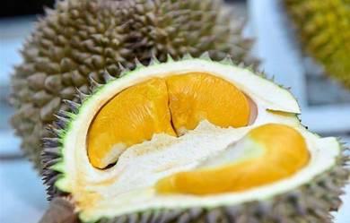 Musang King Durian Farm