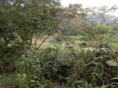 Tanah sesuai berkebun, dusun,ternak, ada jalan, Ulu Beranang, Lenggeng
