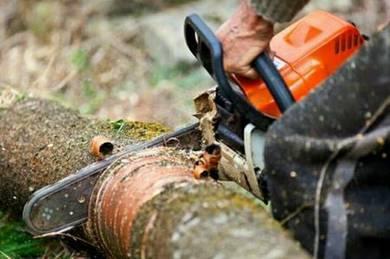 Garden service#tebang pokok