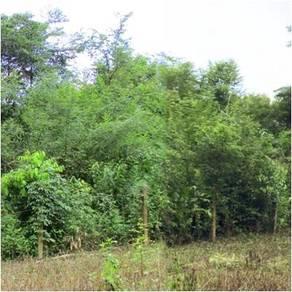Tanah Kediaman Mukim Gelong Kubang Pasu