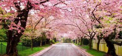 Trip ke korea + nami island (musim bunga)