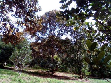 Land 2 ekar, Tanah Dusun, Geran Individual, Lenggeng