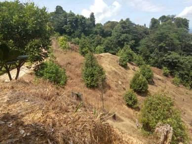 Tanah kebun durian papar