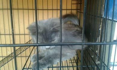 Kucing tuk dilepaskan