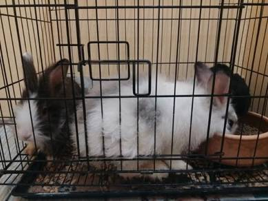 Rabbit (including cage)