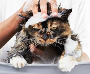 Pusat Mandian/Dandanan Kucing