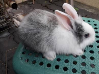 Baby rabbit arnab