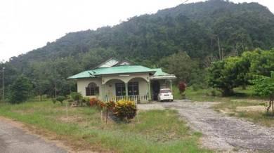 Rumah dan Tanah (hampir 4 ekar) Gua Musang