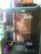 Cage and 2 cats