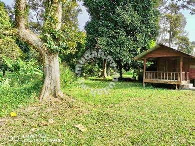 [For Sale] Tanah Pertanian Bersama Dusun Durian Sg Lalang Semenyih