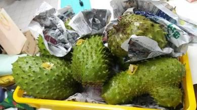 Fresh fruit durian belanda supply