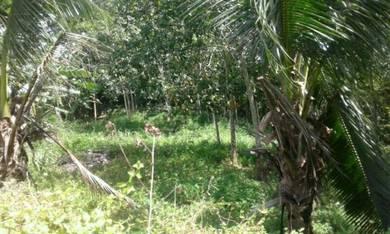 Land for Sale Kg Mansud Kuala Penyu.