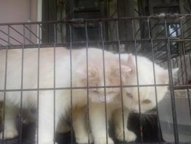 Kucing baka DLH