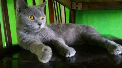 Female bsh