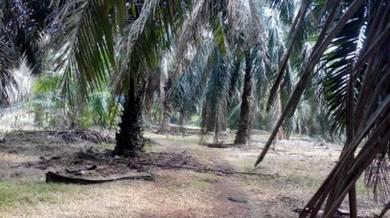 5 Ekar Tanah Kg Jeram Panjang Mukim Gemas Segamat