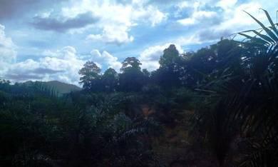 Mencari Tanah Pertanian di Raub, Pahang