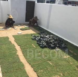 Servis grass rumput landskap hiasan rumah