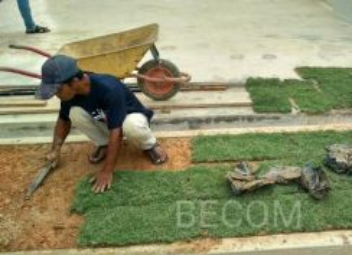 Servis rumput grass hiasan landskap taman rumah