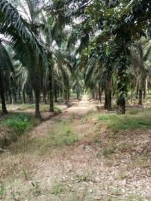 Johor (PALOH) palm oil Estate