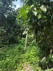 Tanah dusun durian (tanah pamah) boleh loan bank