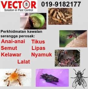 Pest control di Kelantan kawalan serangga perosak
